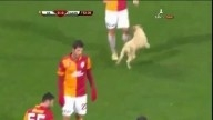 Two dogs join footballers at Galatasaray - Ahlen