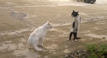 Funny Cats Compilation
